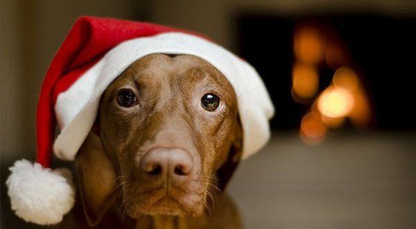 Приметы на 2018 год Земляной Собаки: Что можно, а чего нельзя делать во время новогодних праздников…