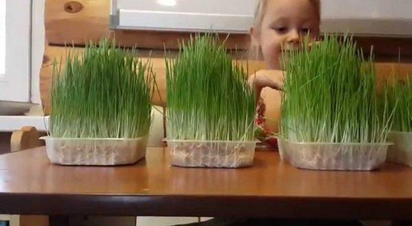 Перестаньте покупать зеленый лук на рынке. Мы расскажем, как просто его выращивать дома!