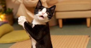 Феноменально смешные кошки